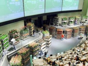 Flower Auction Aalsmeer
