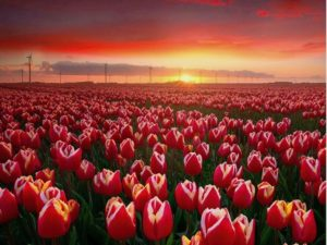 Keukenhof The Dutchman DMC Holland Travel agent Travel concierge