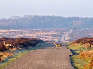 Veluwe Holland The Netherlands The Dutchman Travenagent Travel concierge DMC 01